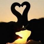 Toţi avem nevoie de atenţie şi de iubire