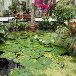Vizita la gradina botanica din Jibou